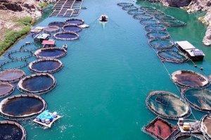 Barajlardaki su ürünleri üretiminin ekonomiye 940 milyon lira katkı