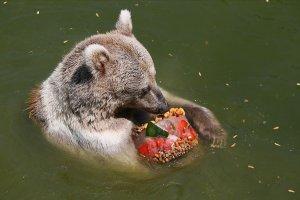 Sıcak havalardan etkilenen hayvanlar 'buzlu menüler'le serinliyor